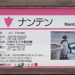 「ぼっちペンギン」で話題のナンテンを撮りに京都市動物園に行ったらナンテンよりぼっちがいた